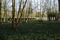 Pterocarya fraxinifolia (vleugelnoten)